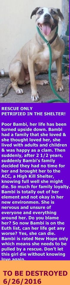Staten Island Center My name is BAMBI. My Animal ID # is A1077293. I am a female tan and white pit bull mix. The shelter thinks I am about 4 YEARS old. I came in the shelter as a OWNER SUR on 06/13/2016 from NY 10312, owner surrender reason stated was NO TIME. http://nycdogs.urgentpodr.org/2016/06/bambi-a1077293/
