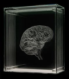 Life Lines: Illustrations by Angela Palmer, details from MRI and CT scans engraved on layers of glass Brain Art, Plastic Art, English Artists, 3d Laser, Arte Horror, Anatomy Art, Installation Art, Sculpture Art, Book Art