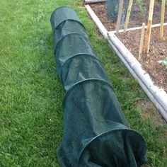 I put up my garden tunnel. For just a few bucks, it's a great way to keep critters out.