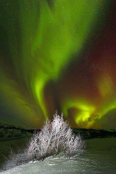 Aurora Borealis in Abisko, Sweden