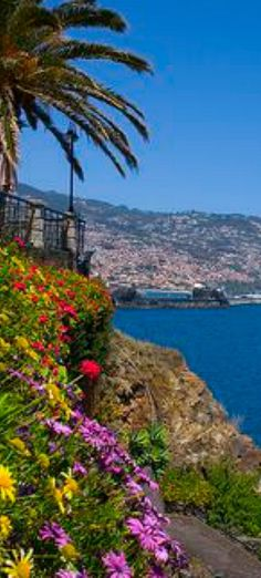 City of Funchal, Madeira Island