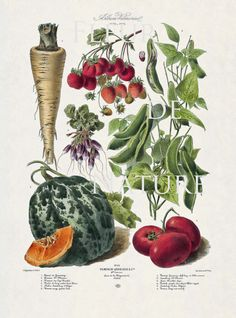 FRENCH VEGETABLE Garden 8X10 Botanical Art Print 30 Antique Beautiful Plants Seed Packet Cantalope Tomato Strawberry Peas Beat to Frame
