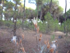 SDC10658, Nature, Pinar Vadohondo, Tinajas, Bodega D.Martín (Villarrobledo, Albacete, España, 7-14 Septiembre, 2013).