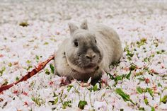 I love flowers and you ? #cute #rabbit #bunny #spring #flower #pink yummypets.com