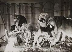 https://www.flickr.com/photos/nationalmediamuseum/3588573761/  A lion tamer at Bertram Mills Touring Circus, Ascot  Edward G Malindine   Collection of National Media Museum