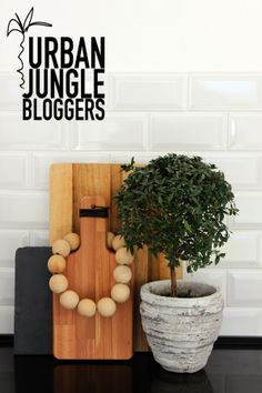 Urban Jungle Bloggers: one plant, three stylings via Jenn Adores