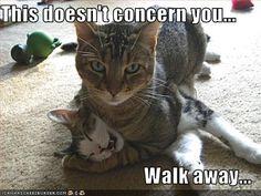 cats are so funny. --- Wendy Schultz via Kimberly Tribble onto Funny. Funny Animal Memes, Funny Animal Pictures, Cat Memes, Funny Animals, Cute Animals, Funny Memes, Funny Photos, Funniest Animals, Funny Tweets