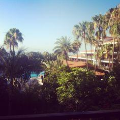 Hotel Parque Tropical en Playa del Ingles en Gran Canaria. Encanto, Buen Trato y buena comida. Primera linea de mar. Hotel Parque, Canario, Places To Go, Tropical, Plants, Parks, Lugares, Food, Flora