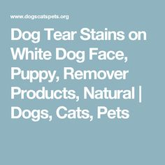 Dog Tear Stains on White Dog Face, Puppy, Remover Products, Natural | Dogs, Cats, Pets