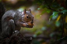 Breakfast on the branches  Animals photo by EmanueleBissoli http://rarme.com/?F9gZi