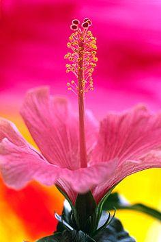 Flowers...Flowers...Flowers...Hibiscus WOW!
