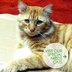 f0c2e8320afef3 64 Best ♥ special needs cats ♥ images