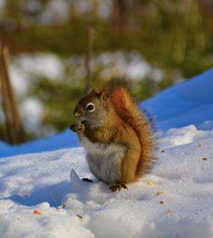 munchkin Prince Edward Island, Bird, Animals, Animales, Animaux, Birds, Animal, Animais