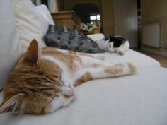 An Introduction to Feline Illnesses and other Cat Health Problems