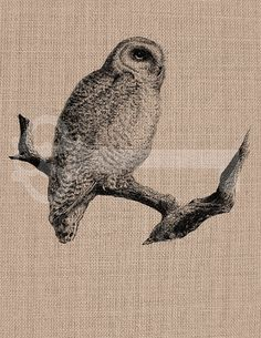 Vintage Owl Graphic Digital Download Image by TanglesGraphics, $1.00