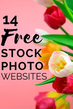 14 Free stock photo websites to use for your blog