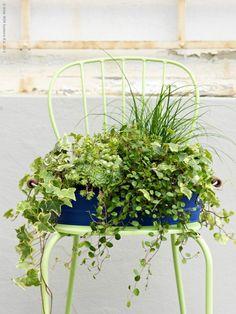 Use a brightly colored planter!