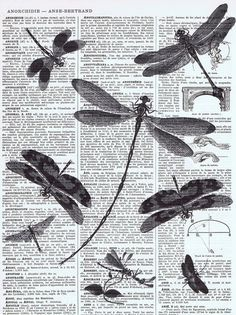 Valentines Day Gift NEW / Vintage Map Page Prints / Dragonflies / Insects…
