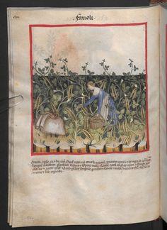 Folio 50v (page 104). Tacuinum sanitatis, Codex Vindobonensis, series nova 2644. Northern Italy, probably Verona, 1380-1399.