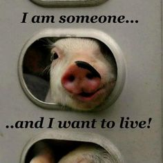 :-( haha this means no more bacon...lol@Karen True