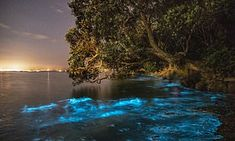 Bioluminescent plankton lights up the water at Tindalls Bay in New Zealand Beach Lighting, Water Lighting, Bioluminescent Plankton, Beach At Night, Bay News, Mail Online, Daily Mail, Light Up, New Zealand