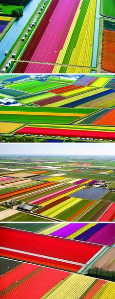 Flower (mostly Tulip) Fields It Amazing And Is Breathtaking From The Air! Flower (mostly Tulip) Fields It Amazing And Is Breathtaking From The Air! Flower Carpet, Beautiful World, Beautiful Places, Wow Photo, Tulip Fields, Thinking Day, Aerial Photography, Photography Flowers, Birds Eye View