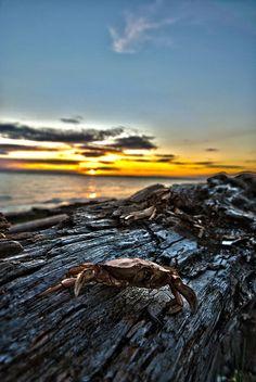 Crescent Beach (White Rock, BC)