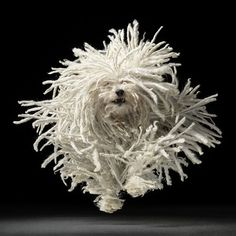 What an awesome shot!  Photography by Tim Flach.
