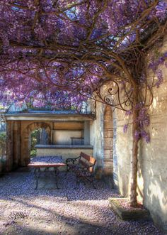 outdoor room with wisteria canopy