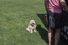 「パピーミル(子犬工場)」の残酷さを伝えるドッグショーが英国ロンドンで開催された。インドやアフガニスタンなどで保護された犬やその飼い主たちも集まった。