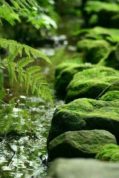 moss&fern by grn_planet Jardim Natural, Walk In The Woods, Nature Pictures, Belle Photo, Amazing Nature, Nature Photography, Beautiful Places, Scenery, Green