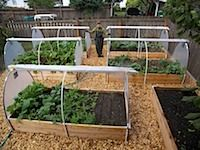 """roll down covers...easy """"coldframe"""" idea"""