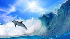 dolphin, waves, light - http://www.wallpapers4u.org/dolphin-waves-light/
