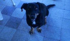 Ha csontot löksz a kutyának, még nem vagy jótékony. Akkor vagy jótékony, ha megosztod a csontot a kutyával, pedig magad is éppoly éhes vagy, mint a kutya.  Jack London
