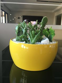 Vasinho de cerâmica com cactus