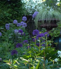 purple garden and great urn; that urn must be sitting atop something else to get it that high. Love the effect!