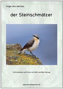 Vogel des Monats: der Steinschmätzer