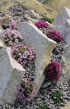 Rock gardening with joseph tychonievich plus our may 6 events tips for planting a rock garden creating an optimal environment and choosing the right plants are essential to creating a rock garden Rockery Garden, Rock Garden Plants, Succulents Garden, Garden Art, Herbs Garden, Succulent Planters, Hanging Planters, Garden Paths, Cactus Plants
