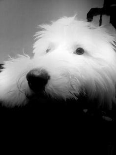 #Mydog#mybobtails