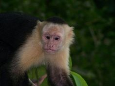 8th July, 2015, this petition makes absolute sense. There is no reason to use live monkeys when they can have computer generated ones. A monkey allegedly bit a worker on a movie set, but the animal may still be forced to perform in an upcoming film. Sign this petition and demand monkeys being used for this purpose be immediately placed in an appropriate animal sanctuary.