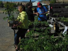 What's New on the SIFT farm. Annual Plant Sale a Success, Bed Seeding Underway. Appropriate Technology, Annual Plants, Plant Sale, Seeds, Environment, Success