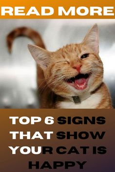 Pet Dogs, Dog Cat, Cat Info, Lots Of Cats, Horses And Dogs, Cute Cats And Dogs, Cat Behavior, Cat Facts, Love Pet