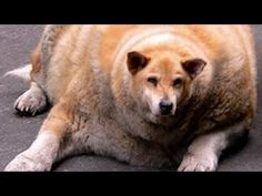 TRY NOT TO LAUGH OR GRIN   Funny Dog Compilation 2016