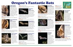 Batty for bats! : Oregon's fantastic bats, by the Oregon Department of Fish and Wildlife