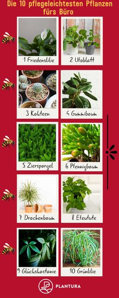 Office plants: 10 easy-care plants for the office # easy-care plants 10 p Ficus, Easy Care Plants, Office Plants, Gardening, Outdoor Structures, Decor, Bro, Dog Harness, Peach