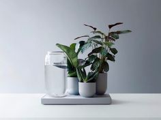 Ceramic vase with automatic watering TABLEAU by PIKAPLANT