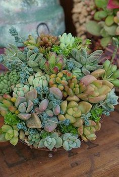 so beautiful; succulents bundled together