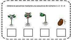 Ordenamos secuencias temporales con dibujos -Orientacion Andujar Pre School, Classroom, Flower, Life Skills, Gross Motor