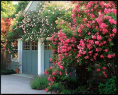 Lesson #1: Make a bold statement by planting in profusion.