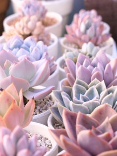 #succulents #color #pastels
